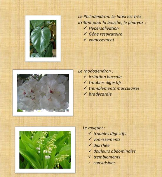 Les fleur1